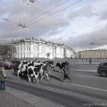 ларенков_коровы.jpg