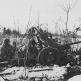 Расчет советской 45-мм противотанковой пушки 53-К на позиции на Карельском перешейке