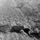 Тела советских военнослужащих, расстрелянных немецкими солдатами в Смоленской области